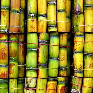 Cane Sugar Fragrance Oil