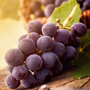 Grape Fragrance Oil
