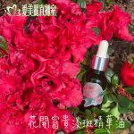 花開富貴淡斑精華油